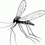 how-to-get-rid-of-mosquitos-in-yard-photo